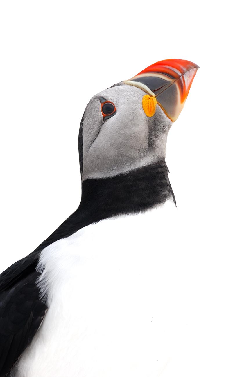 Seabirds and snow - Birds & Habitats, Jose Manuel Grandío