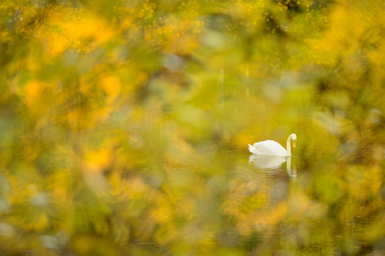 Between the leaves - Birds & Habitats, Jose Manuel Grandío