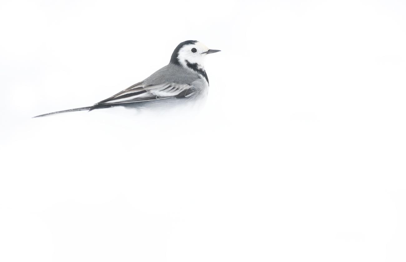 White winter - Birds & Habitats, Jose Manuel Grandío