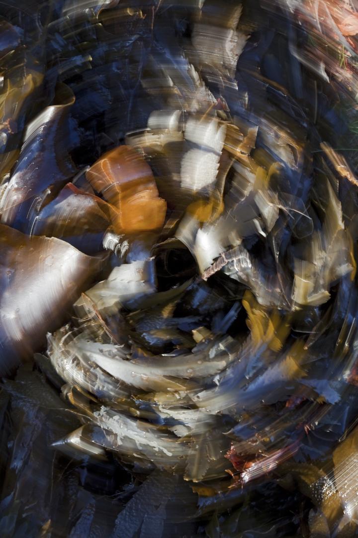 Jardines de mar - galería: jardines de mar :: fotografías de autor: ubaldo moreno