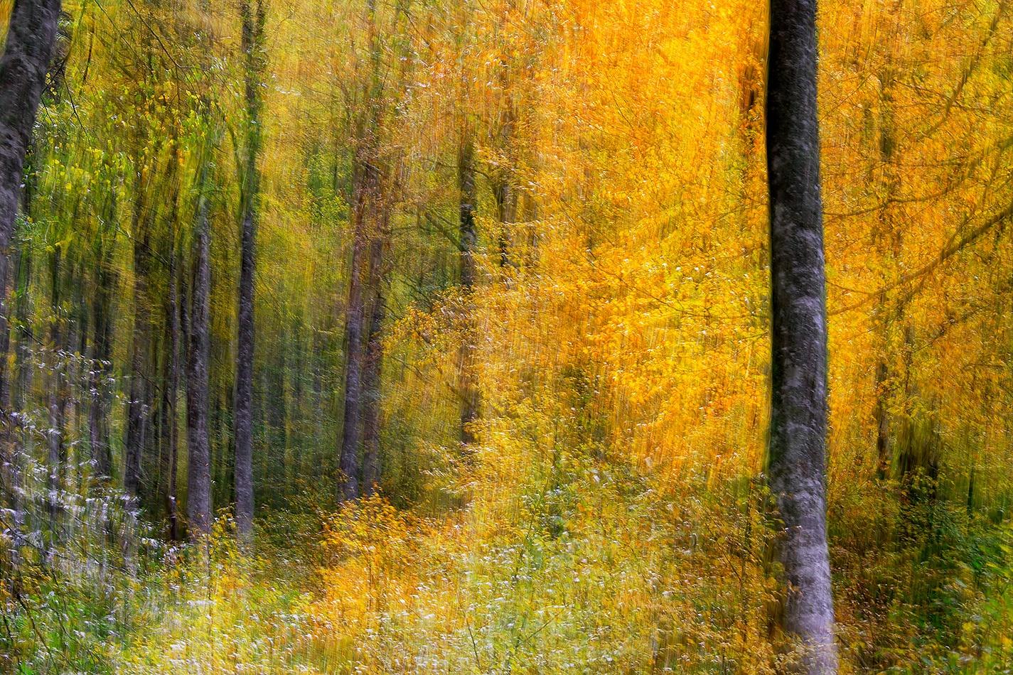 El bosque en la memoria - galería: el bosque en la memoria :: fotografías de autor: ubaldo moreno