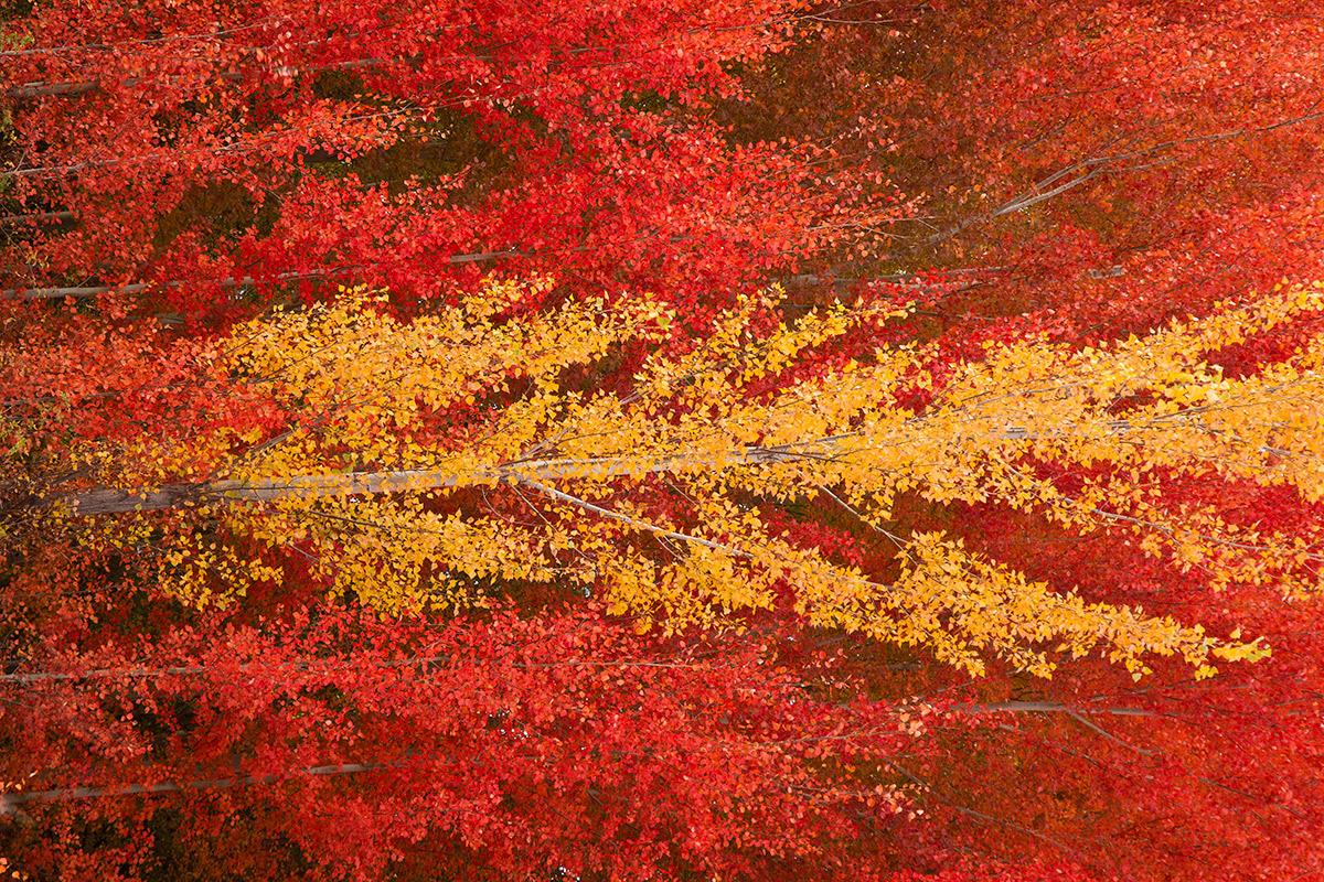 Banderas - Expresiones vegetales - Uge Fuertes Sanz, Fotografía de naturaleza desde el arte y creatividad. Imaginación en fotografía,  busqueda de elementos artísticos. Composición y efectos pictoricos.Simbolismo.