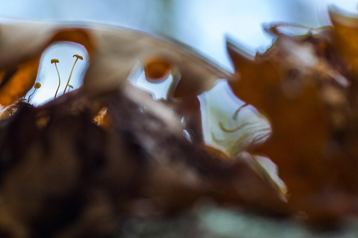 Duende gritando a las setas - Expresiones vegetales - Uge Fuertes Sanz, Fotografía de naturaleza desde el arte y creatividad. Imaginación en fotografía,  busqueda de elementos artísticos. Composición y efectos pictoricos.Simbolismo.