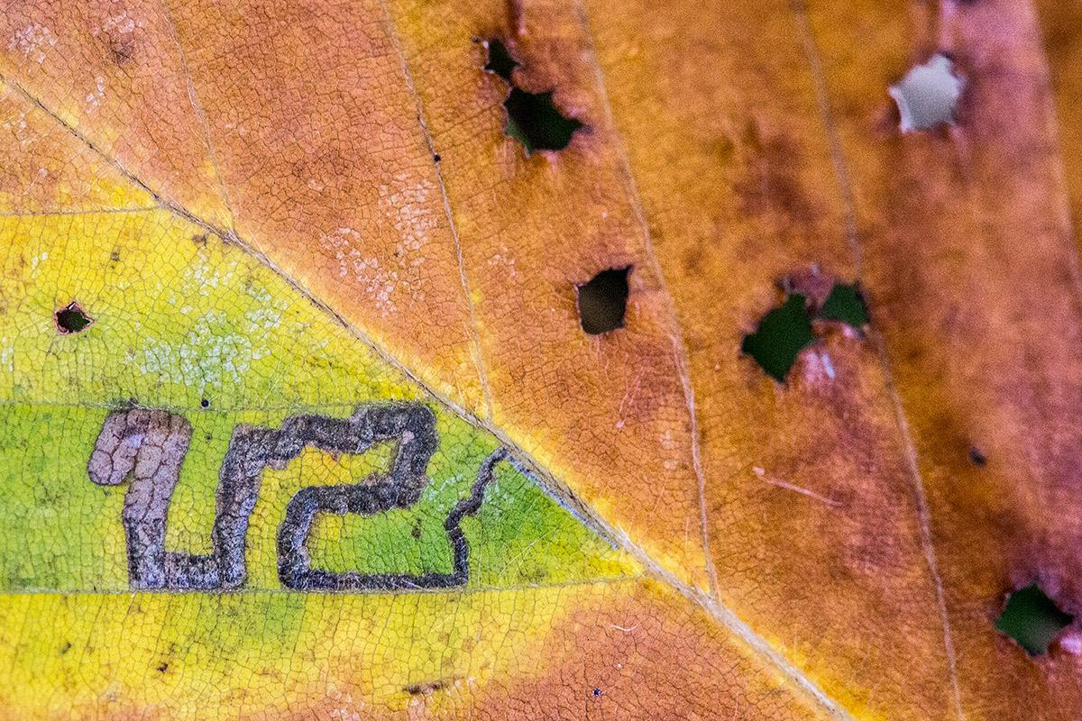 U2 - Expresiones vegetales - Uge Fuertes Sanz, Fotografía de naturaleza desde el arte y creatividad. Imaginación en fotografía,  busqueda de elementos artísticos. Composición y efectos pictoricos.Simbolismo.