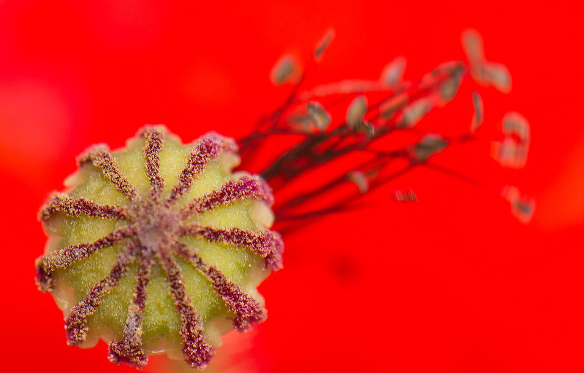 La cometa - Expresiones vegetales - Uge Fuertes Sanz, Fotografía de naturaleza desde el arte y creatividad. Imaginación en fotografía,  busqueda de elementos artísticos. Composición y efectos pictoricos.Simbolismo.