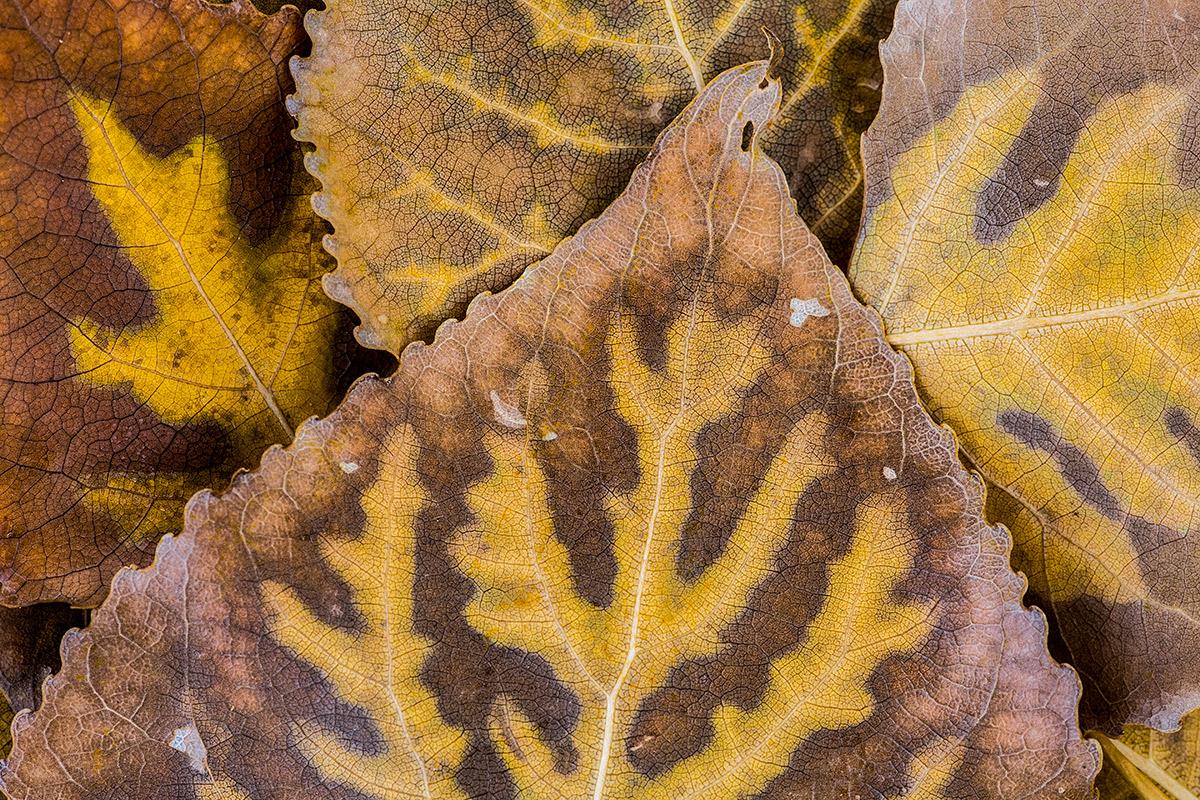 Hoja de hojas - Expresiones vegetales - Uge Fuertes Sanz, Fotografía de naturaleza desde el arte y creatividad. Imaginación en fotografía,  busqueda de elementos artísticos. Composición y efectos pictoricos.Simbolismo.