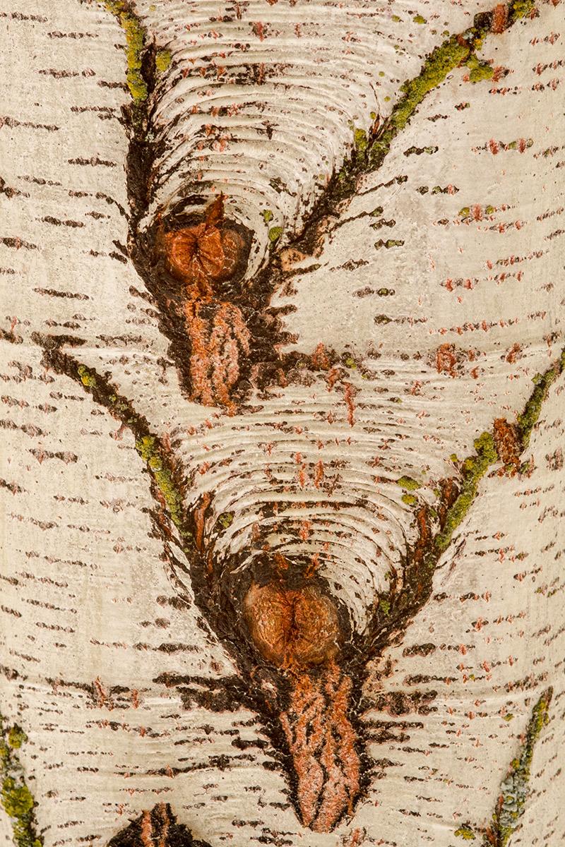 Lametazos de perro - Expresiones vegetales - Uge Fuertes Sanz, Fotografía de naturaleza desde el arte y creatividad. Imaginación en fotografía,  busqueda de elementos artísticos. Composición y efectos pictoricos.Simbolismo.