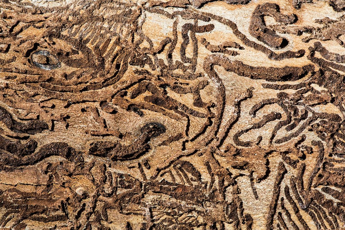 Expresiones vegetales - Uge Fuertes Sanz, Fotografía de naturaleza desde el arte y creatividad. Imaginación en fotografía,  busqueda de elementos artísticos. Composición y efectos pictoricos.Simbolismo.