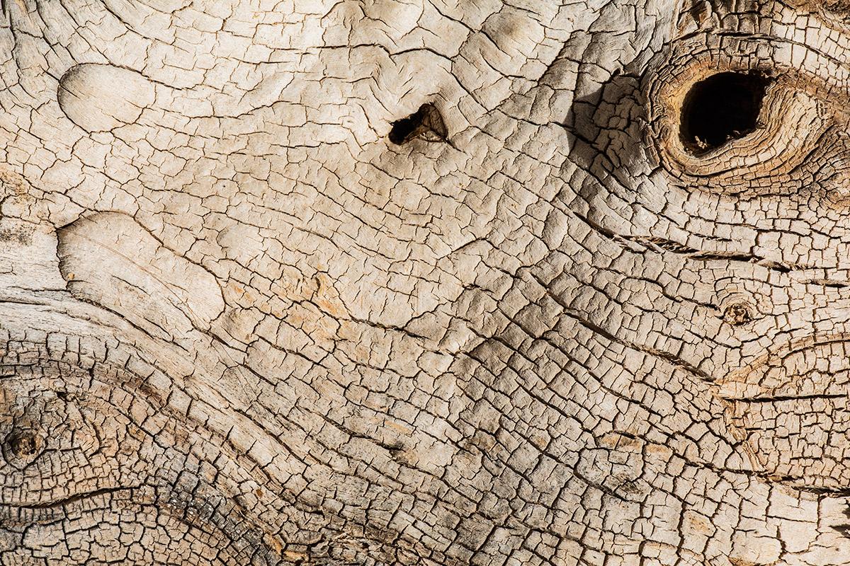 Dinosaurio - Expresiones vegetales - Uge Fuertes Sanz, Fotografía de naturaleza desde el arte y creatividad. Imaginación en fotografía,  busqueda de elementos artísticos. Composición y efectos pictoricos.Simbolismo.