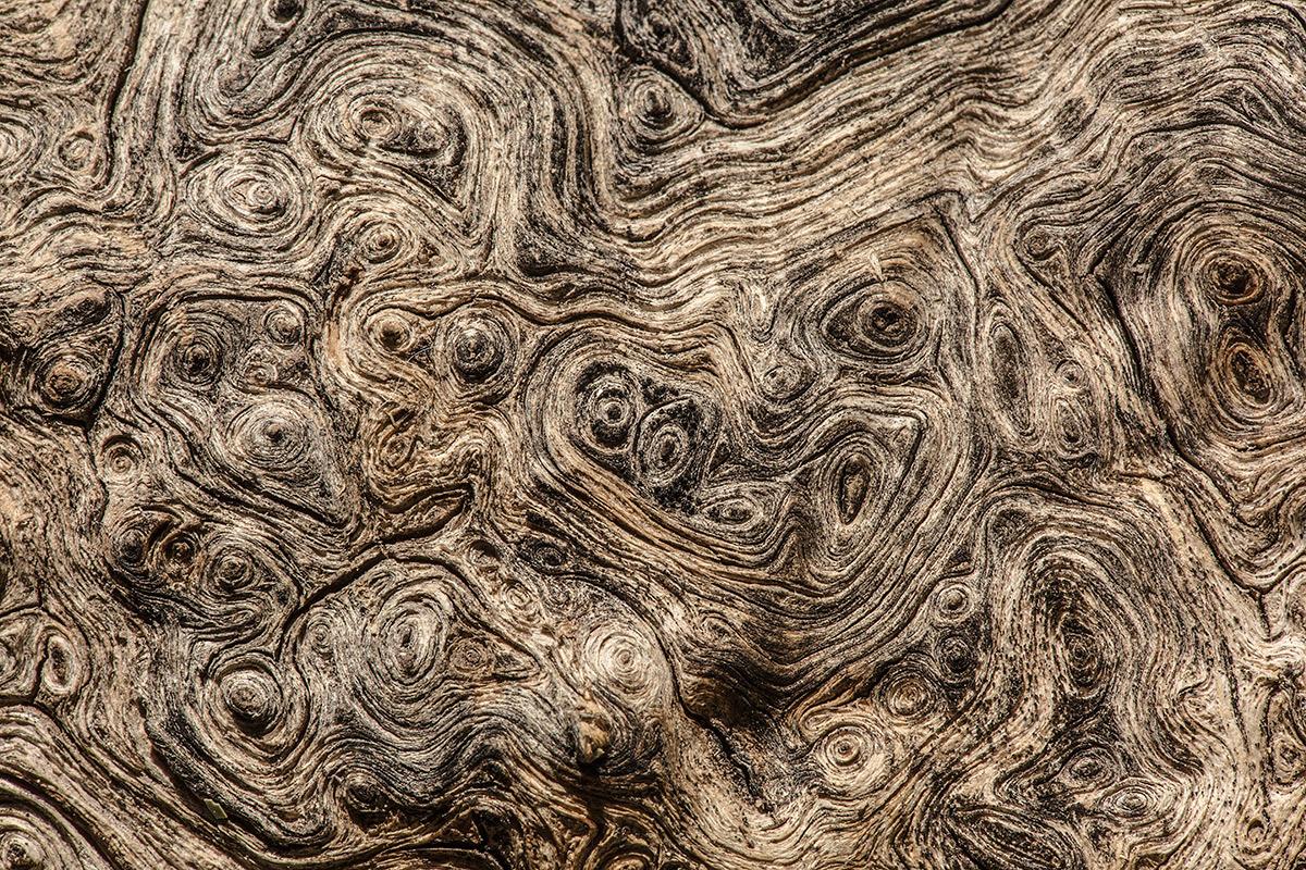 Visión aérea. - Expresiones vegetales - Uge Fuertes Sanz, Fotografía de naturaleza desde el arte y creatividad. Imaginación en fotografía,  busqueda de elementos artísticos. Composición y efectos pictoricos.Simbolismo.