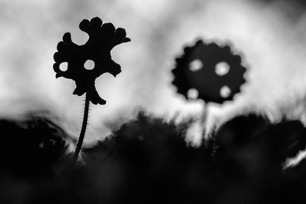 Las hojas de Guernica - Expresiones vegetales - Uge Fuertes Sanz, Fotografía de naturaleza desde el arte y creatividad. Imaginación en fotografía,  busqueda de elementos artísticos. Composición y efectos pictoricos.Simbolismo.
