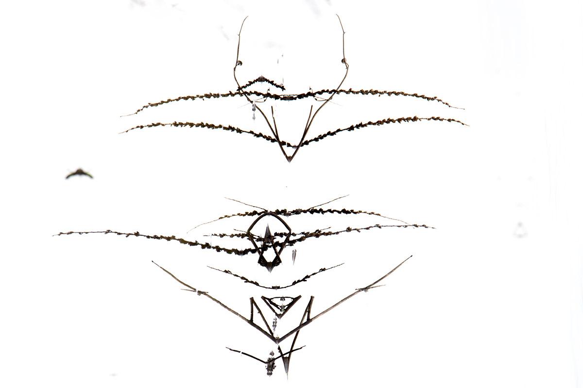 La paloma de la paz - Mis monstruos - Uge Fuertes Sanz, Fotografía de naturaleza desde el arte y creatividad. Imaginación en fotografía,  busqueda de elementos artísticos. Composición y efectos pictoricos