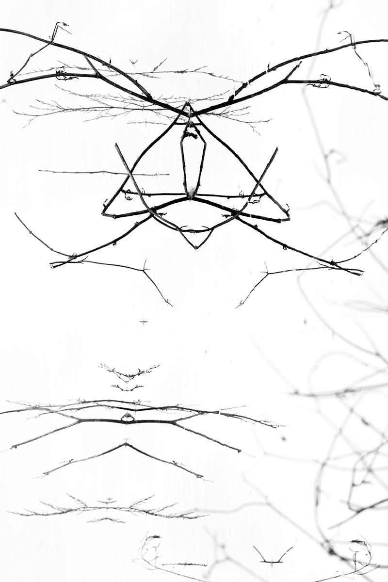 EL gato enfadado - Mis monstruos - Uge Fuertes Sanz, Fotografía de naturaleza desde el arte y creatividad. Imaginación en fotografía,  busqueda de elementos artísticos. Composición y efectos pictoricos