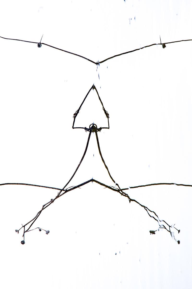 Enfado - Mis monstruos - Uge Fuertes Sanz, Fotografía de naturaleza desde el arte y creatividad. Imaginación en fotografía,  busqueda de elementos artísticos. Composición y efectos pictoricos