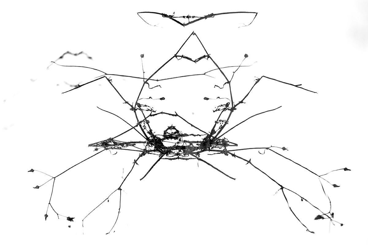Araña tejiendo - Mis monstruos - Uge Fuertes Sanz, Fotografía de naturaleza desde el arte y creatividad. Imaginación en fotografía,  busqueda de elementos artísticos. Composición y efectos pictoricos