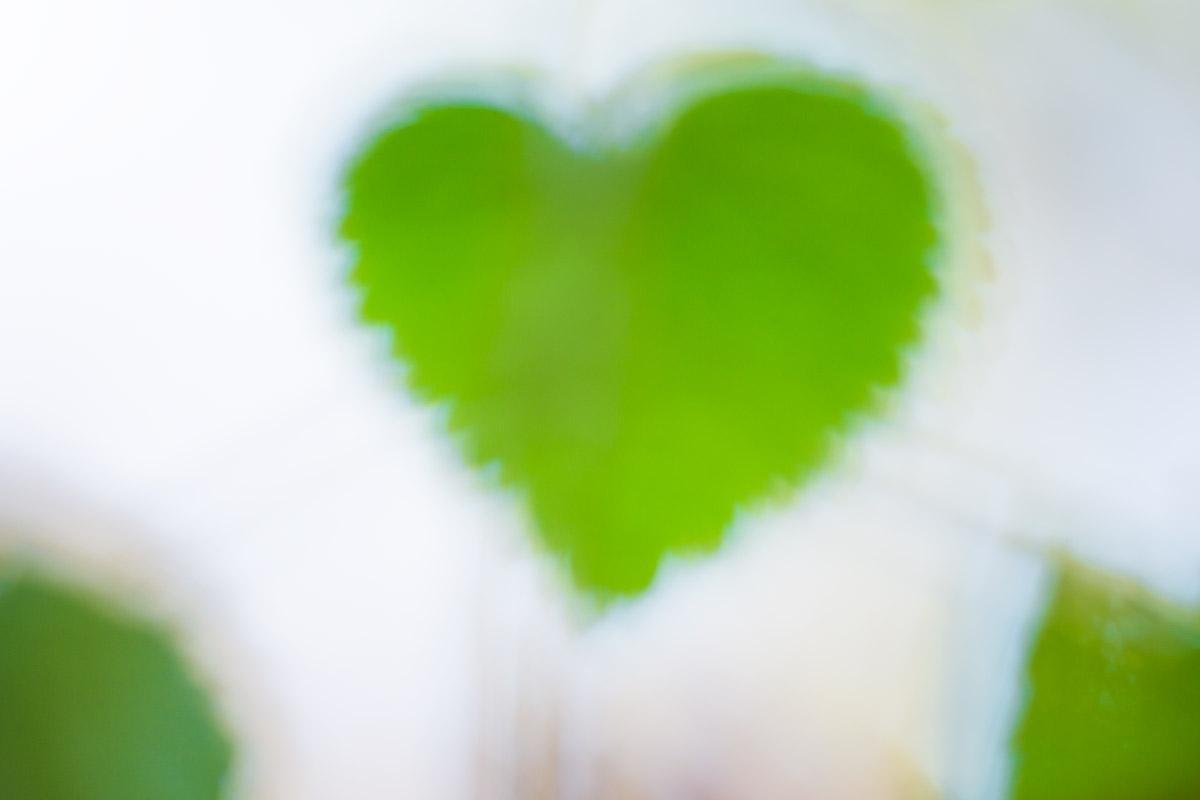 Corazones efímeros - Uge Fuertes Sanz, Fotografía de naturaleza desde el arte y creatividad.Corazón. Imaginación en fotografía,  busqueda de elementos artísticos. Composición y efectos pictoricos
