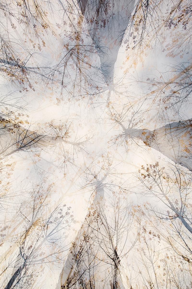 Otoño - Alma de los árboles - Uge Fuertes Sanz, Fotografía de naturaleza desde el arte y creatividad. Imaginación en fotografía,  busqueda de elementos artísticos. Composición y efectos pictoricos