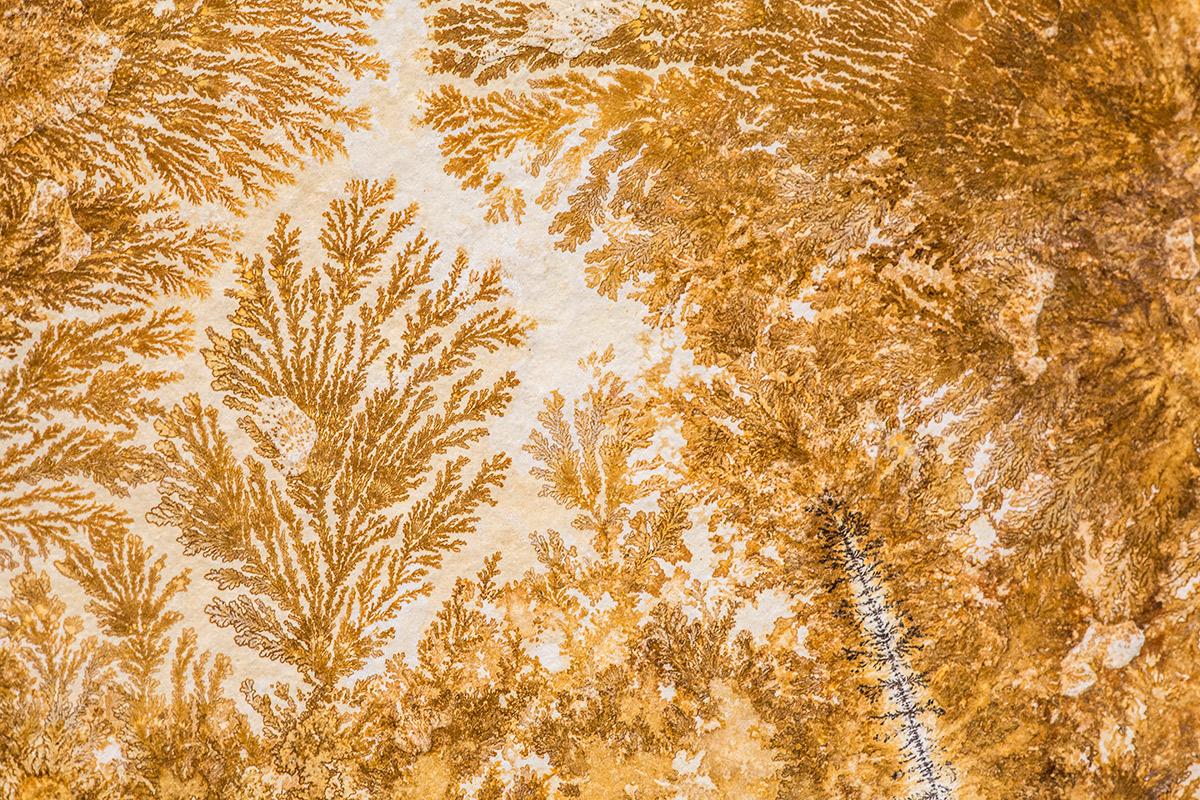 Arbol dendrítico - Alma de los árboles - Uge Fuertes Sanz, Fotografía de naturaleza desde el arte y creatividad. Imaginación en fotografía,  busqueda de elementos artísticos. Composición y efectos pictoricos