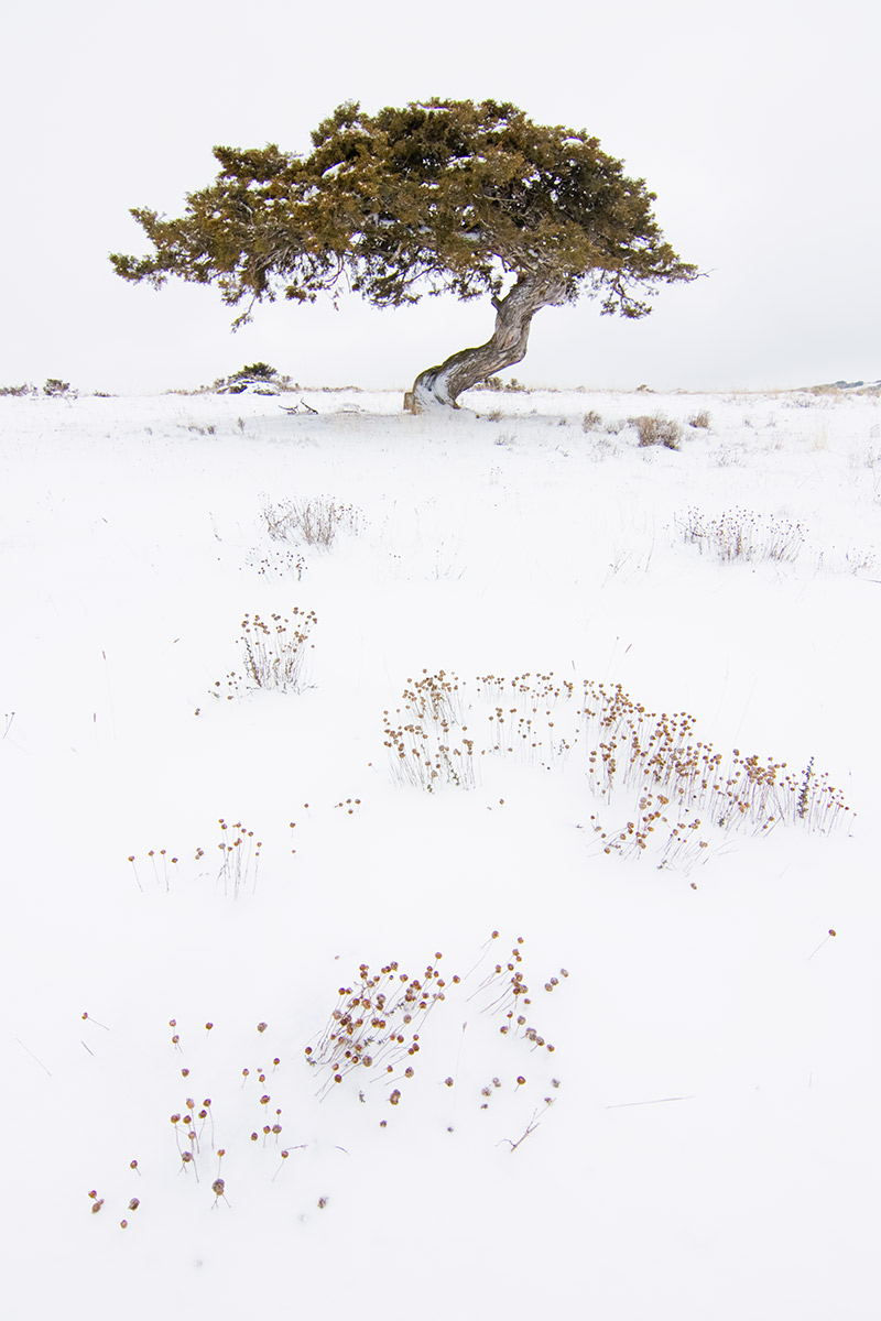 as - Alma de los árboles - Uge Fuertes Sanz, Fotografía de naturaleza desde el arte y creatividad. Imaginación en fotografía,  busqueda de elementos artísticos. Composición y efectos pictoricos