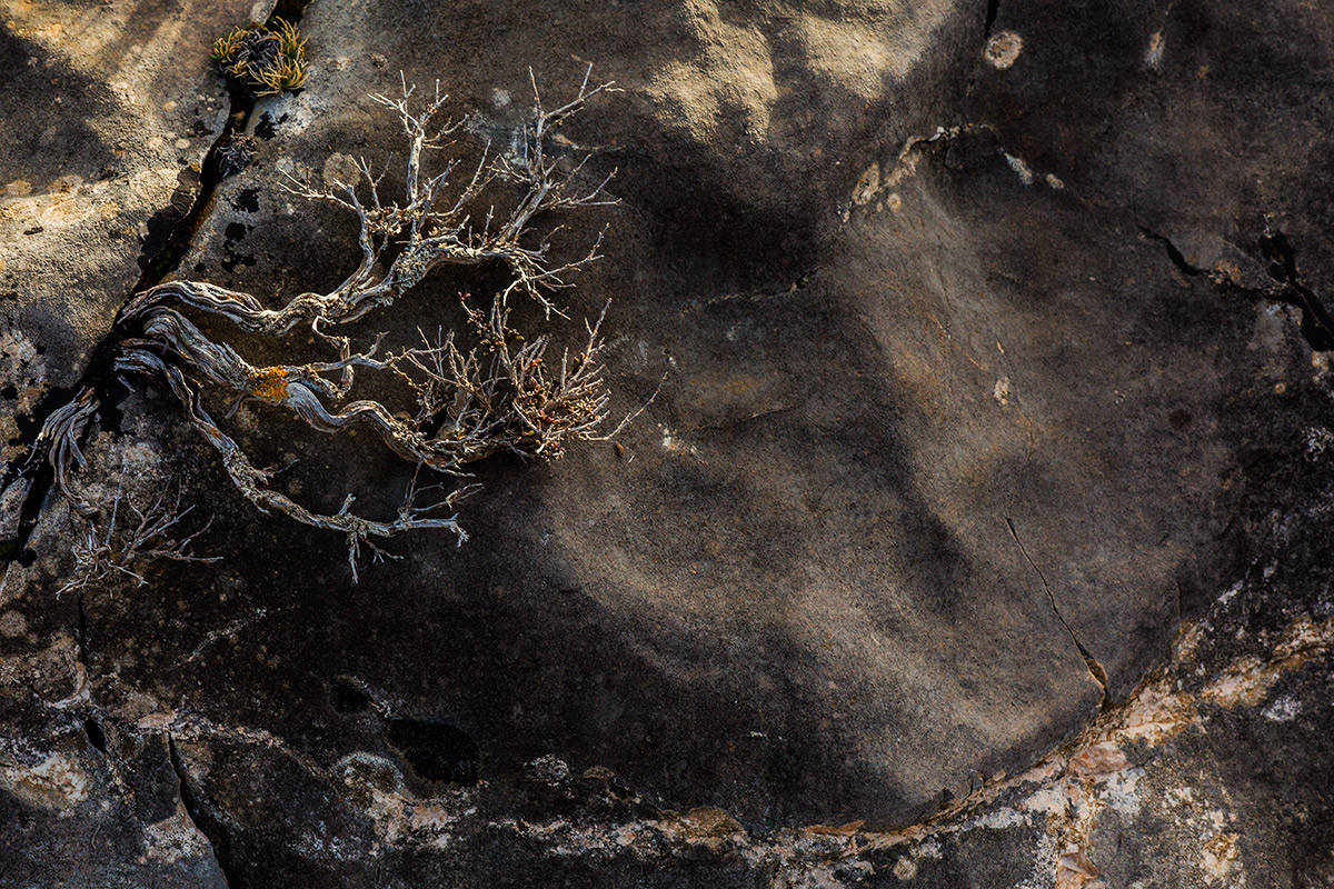 Vidas agrietadas - Alma de los árboles - Uge Fuertes Sanz, Fotografía de naturaleza desde el arte y creatividad. Imaginación en fotografía,  busqueda de elementos artísticos. Composición y efectos pictoricos