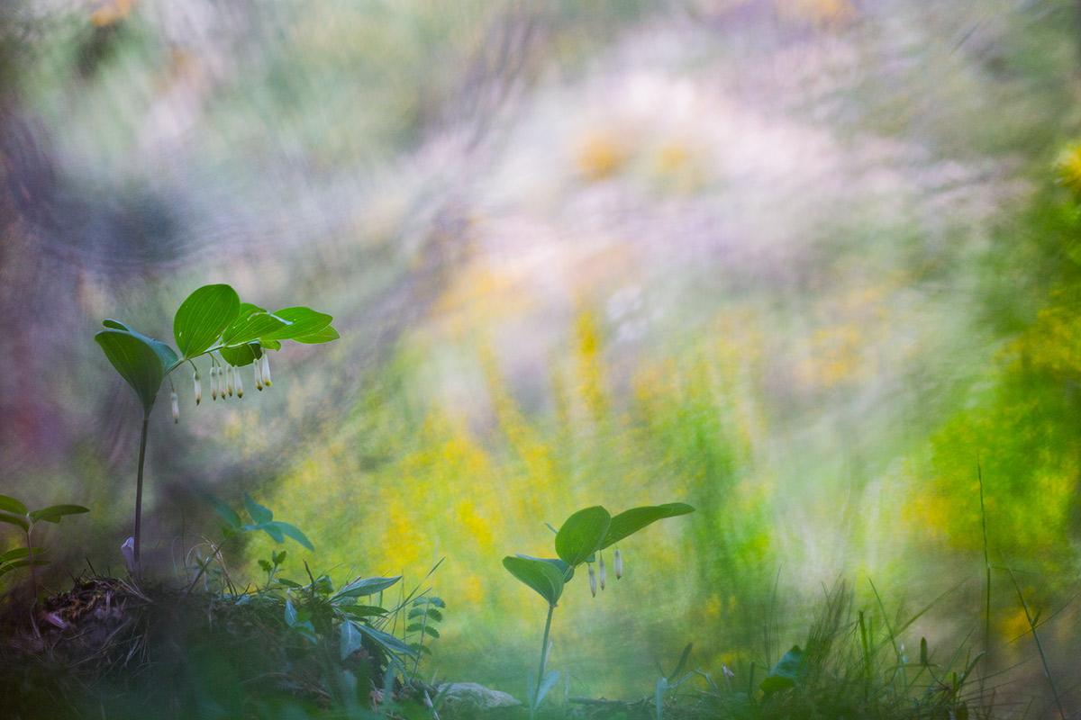 Desenfocando la mirada - Uge Fuertes Sanz, Fotografía de naturaleza desde el arte y creatividad. Imaginación en fotografía,  busqueda de elementos artísticos. Composición y efectos pictoricos
