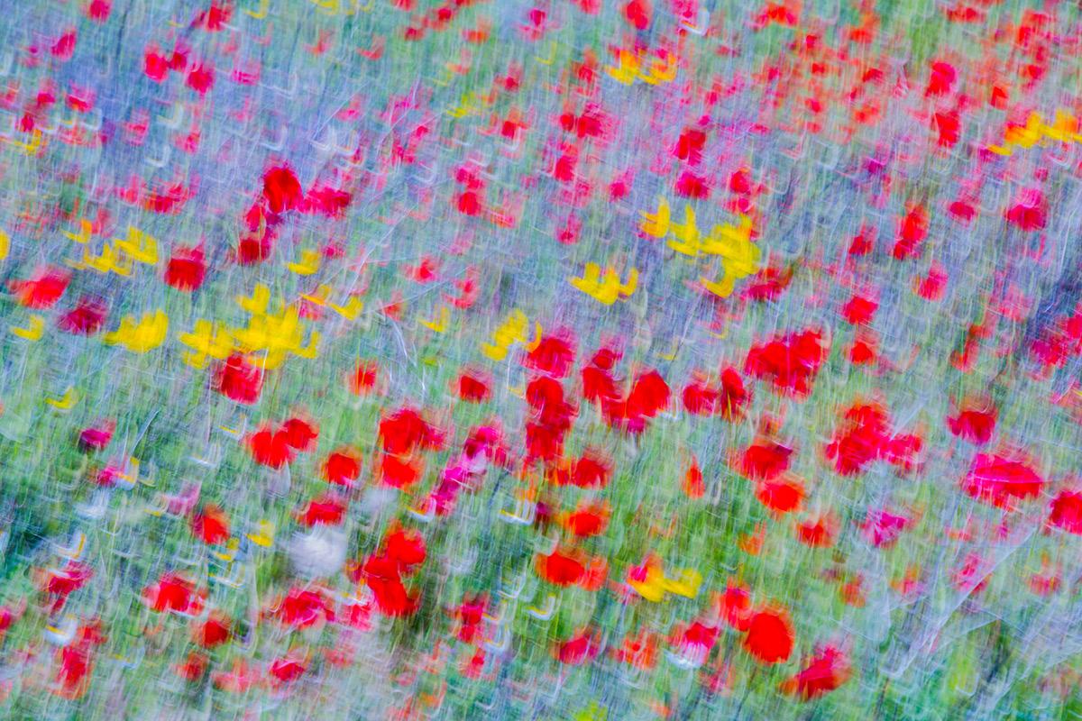 Amapolarte - Uge Fuertes Sanz, Fotografía de naturaleza desde el arte y creatividad.Amapolas. poppie. Imaginación en fotografía,  busqueda de elementos artísticos. Composición y efectos pictoricos