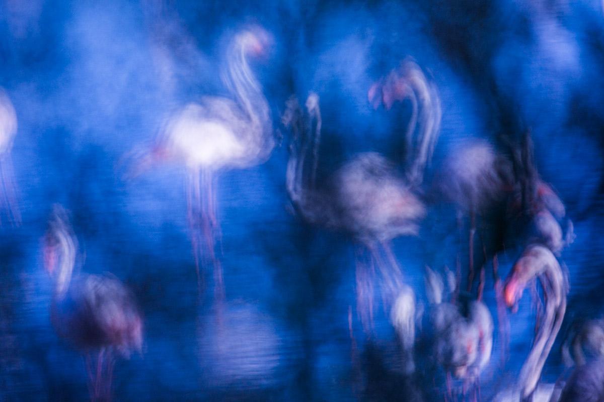 Pintando Flamencos - Uge Fuertes Sanz, Fotografía de naturaleza desde el arte y creatividad. Imaginación en fotografía,  busqueda de elementos artísticos. Composición y efectos pictoricos, Flamenco, flamingos.