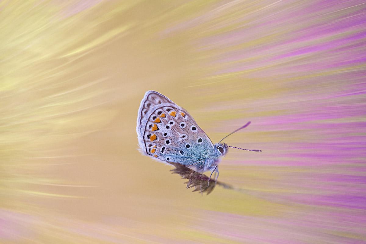 Jardín de insectos - Uge Fuertes Sanz, Fotografía de naturaleza desde el arte y creatividad.Insectos, mariposas. Imaginación en fotografía,  busqueda de elementos artísticos. Composición y efectos pictoricos