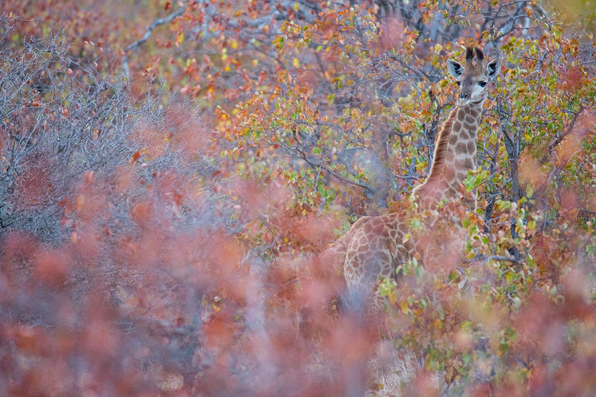 Camuflarte - Uge Fuertes Sanz, Fotografía de naturaleza desde el arte y creatividad.Camuflaje, Imaginación en fotografía,  busqueda de elementos artísticos. Composición y efectos pictoricos