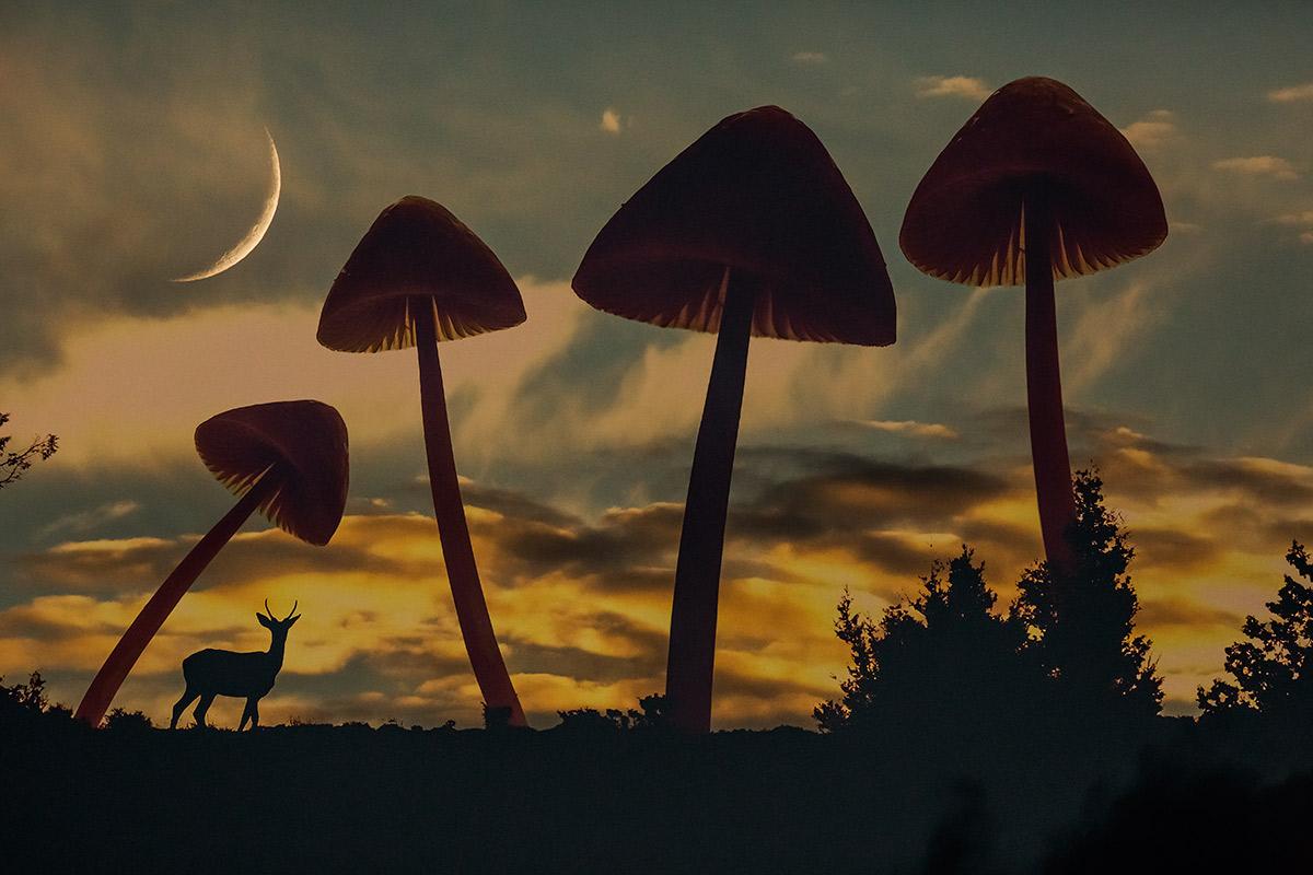 Mirada otoñal - Uge Fuertes Sanz, Fotografía de naturaleza desde el arte y creatividad.Otoño. color. Imaginación en fotografía,  busqueda de elementos artísticos. Composición y efectos pictoricos