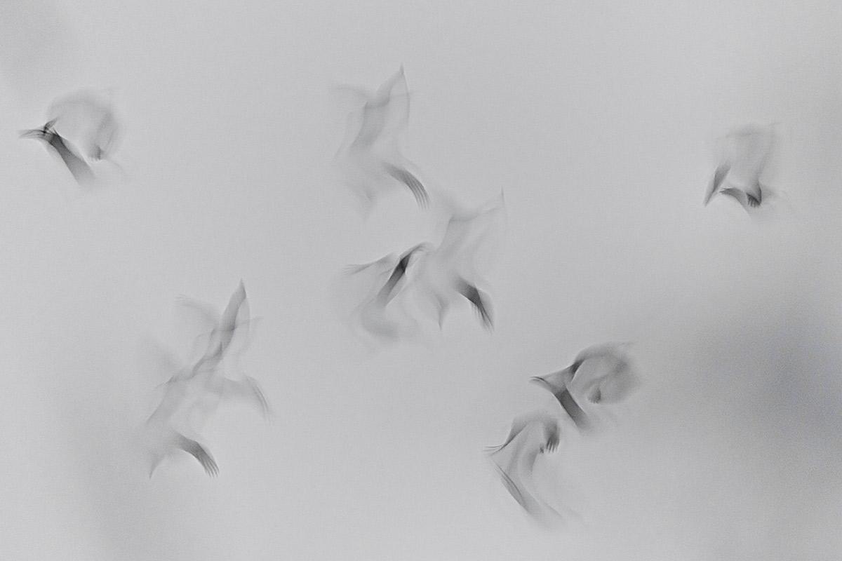 Soñando grullas - Uge Fuertes Sanz, Fotografía de naturaleza desde el arte y creatividad. Imaginación en fotografía,  busqueda de elementos artísticos. Composición y efectos pictoricos. grulla. Grus grus.