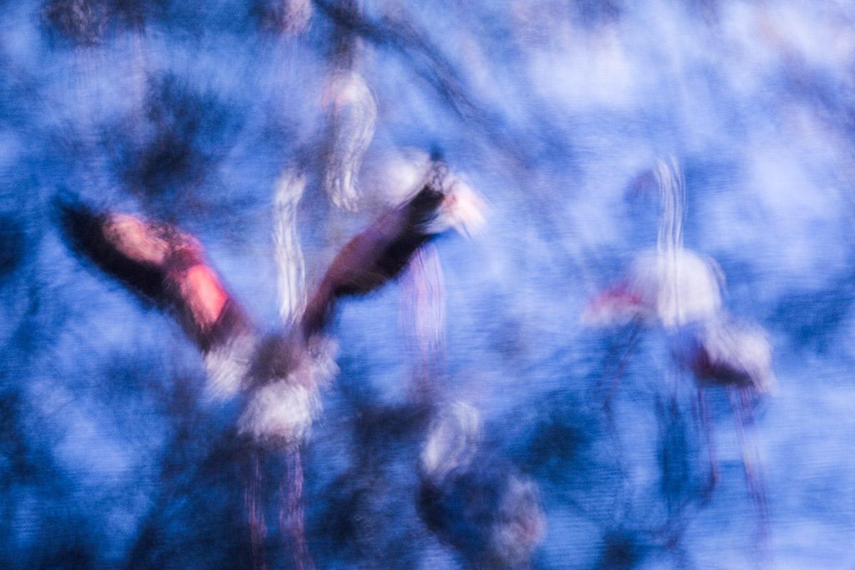 Inicio - Uge Fuertes Sanz, Fotografía de naturaleza y creatividad