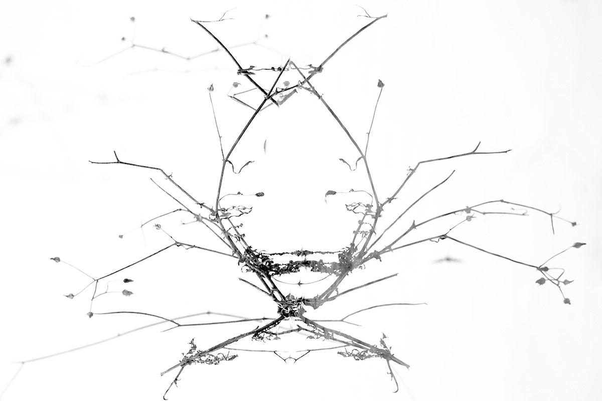 La araña hipster - Mis monstruos - Uge Fuertes Sanz, Fotografía de naturaleza desde el arte y creatividad. Imaginación en fotografía,  busqueda de elementos artísticos. Composición y efectos pictoricos