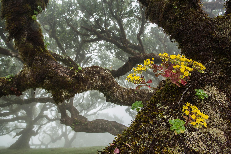 Alma de los árboles - Uge Fuertes Sanz, Fotografía de naturaleza desde el arte y creatividad. Imaginación en fotografía,  busqueda de elementos artísticos. Composición y efectos pictoricos