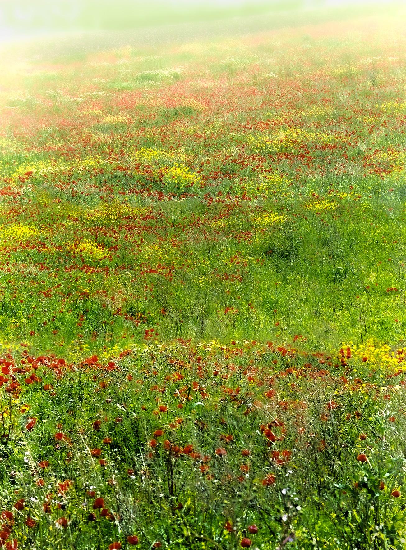 Nature - Urbano Suárez,  FineArt Photography