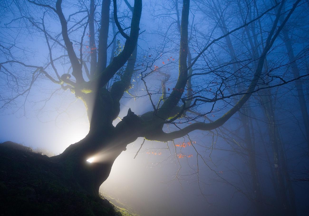 Bosque nocturno - Urtzi Vera, Arte y Naturaleza
