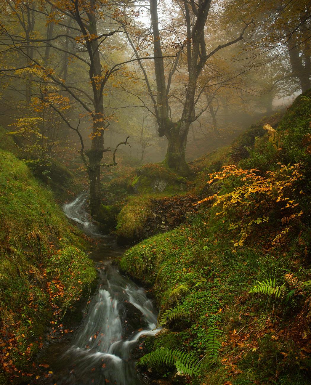Bosque y ribera - Urtzi Vera, Arte y Naturaleza