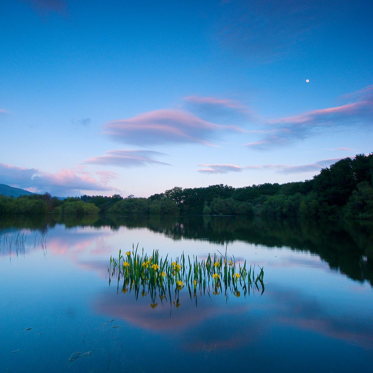Pantano - Urtzi Vera, Arte y Naturaleza