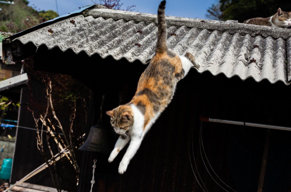Aoshima, la isla de los gatos - VictorJV, Photoreporter