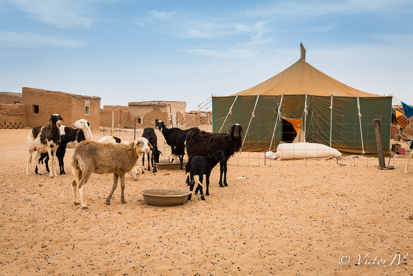 Campamento de Dajla. Sahara Occidental - VictorJV, Photoreporter