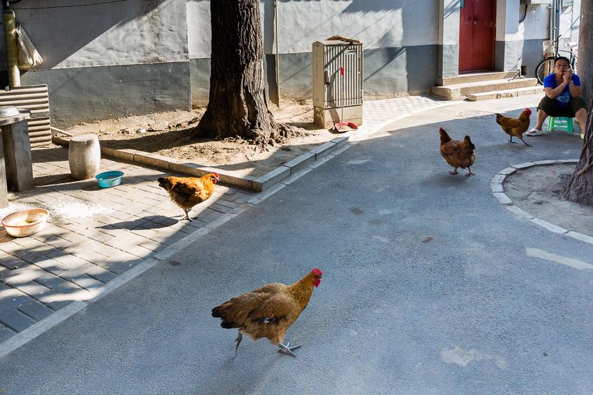 Callejeando por los Hutongs de Beijing. - VictorJV, Photoreporter