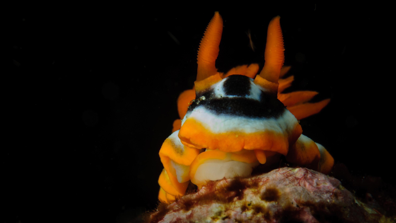 Mundo Diminuto - Wildlife Conservation Photography, UWDREAMS.COM