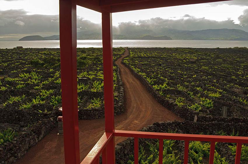 Viñedos. Areia Larga. Isla de Pico - Islas Azores - Islas Azores - Roberto Bueno – Fotografía de Naturaleza