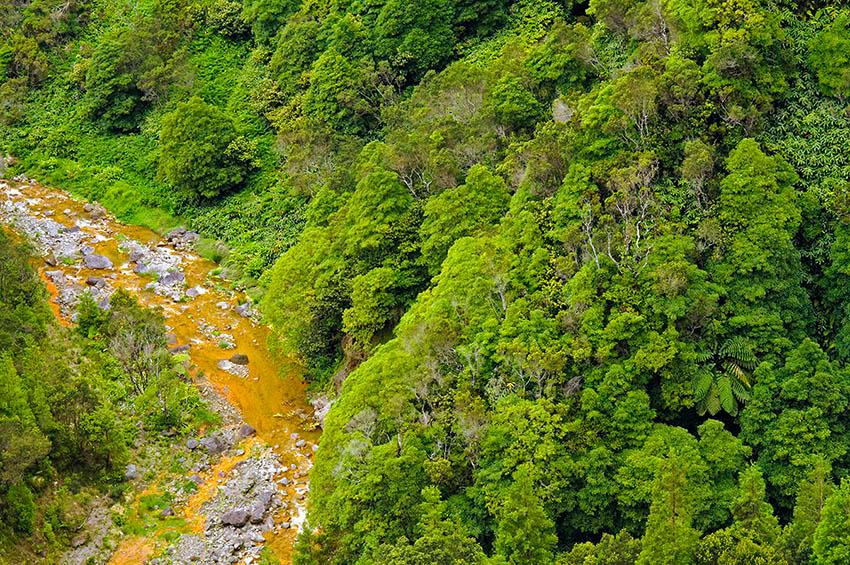 Selva atlántica. Isla de Sao Miguel - Islas Azores - Islas Azores - Roberto Bueno – Fotografía de Naturaleza