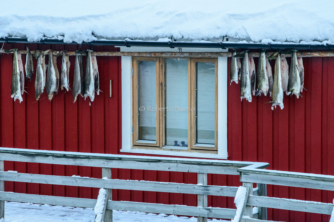 Seco y congelado - Islas Lofoten - Islas Lofoten, Noruega. Roberto bueno. Paisajes de invierno