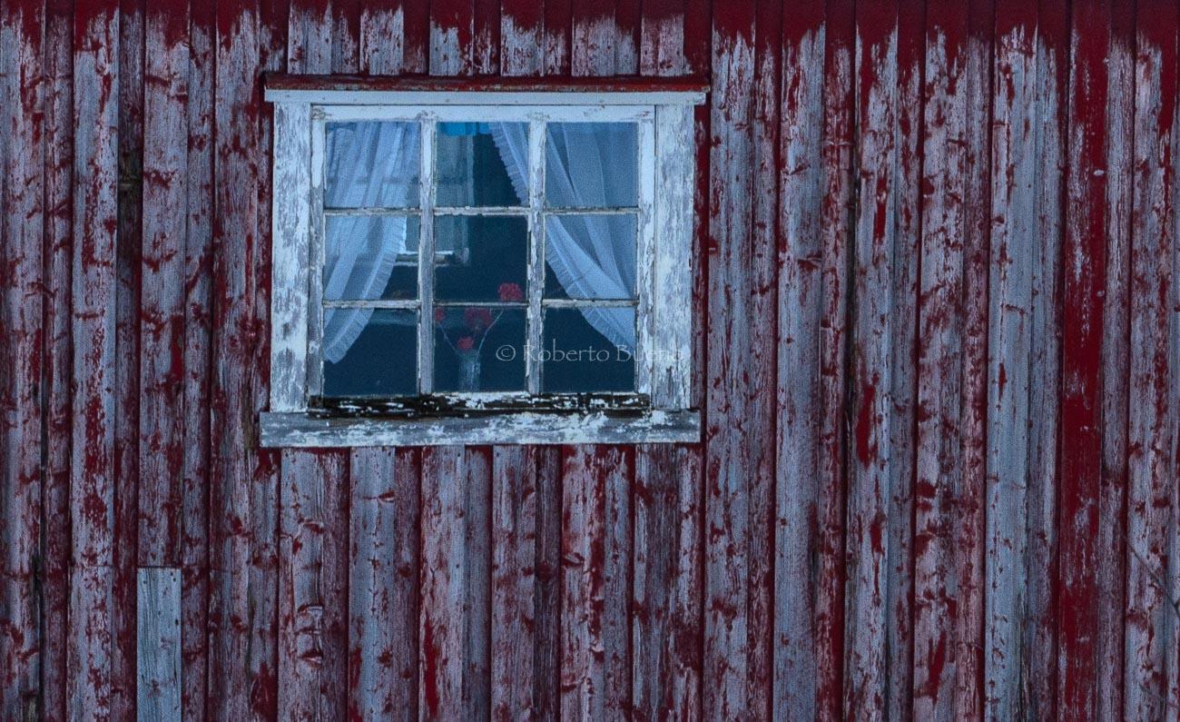 Flores rojas - Islas Lofoten - Islas Lofoten, Noruega. Roberto bueno. Paisajes de invierno