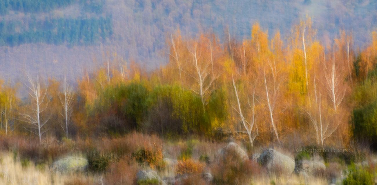 Otoño movido. Sierra de Béjar. Salamanca - Con Otros Ojos - Con Otros Ojos - Roberto Bueno – Fotografía, Naturaleza, Abstracciones