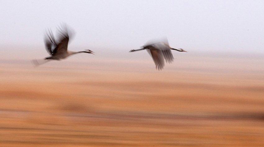 Grullas en la niebla - Con Otros Ojos - Con Otros Ojos - Roberto Bueno – Fotografía, Naturaleza, Abstracciones