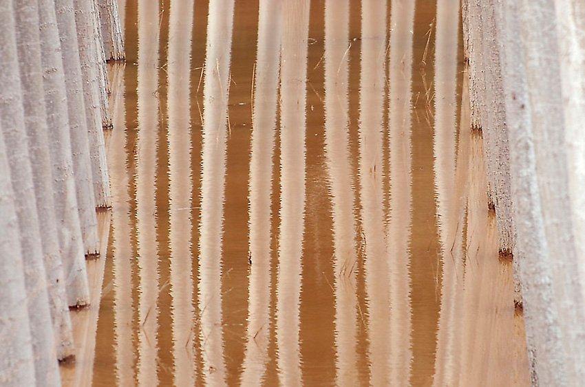 La chopera inundada - Con Otros Ojos - Con Otros Ojos - Roberto Bueno – Fotografía, Naturaleza, Abstracciones