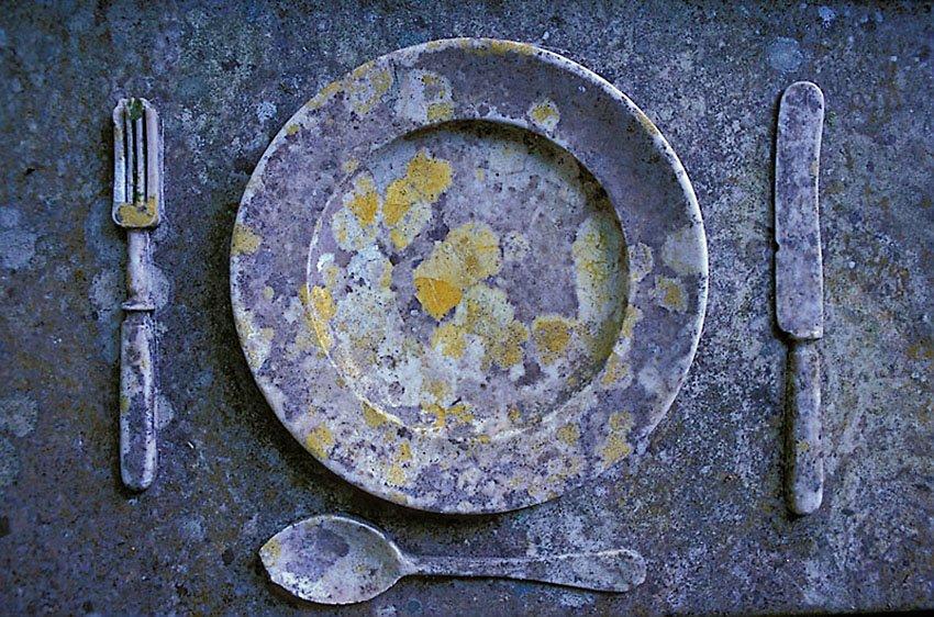 Líquenes en la mesa - Flora  - Flora - Roberto Bueno – Fotografía, Naturaleza, árboles, flores, hongos, líquenes